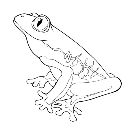 coloring woody frog is red-eyed  vector illustration