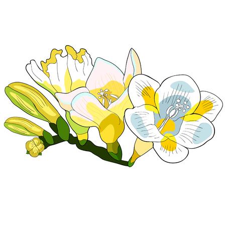 the branch flower freesia kind of iris.  vector illustration