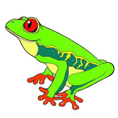 woody frog is red-eyed  vector illustration