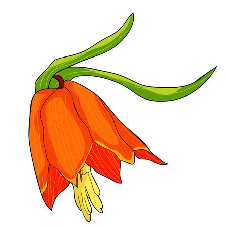 the Fritillaria imperialis flower paradise tree  vector illustration Illustration
