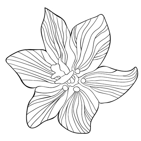 Fritillaria imperialis flower paradise tree vector illustration