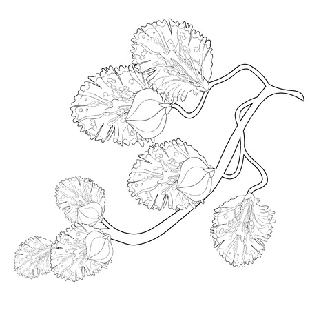 Willow coloring branch flower spring vector illustration