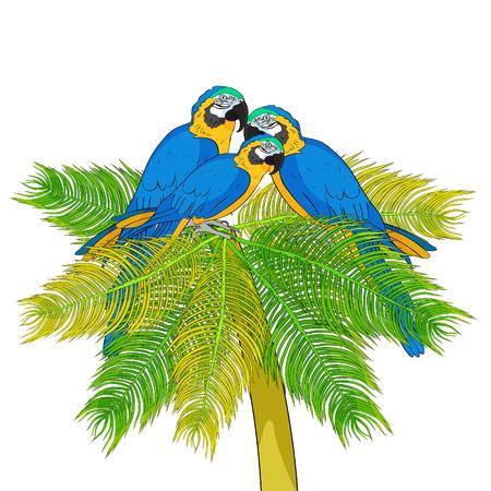 Macaw a parrot yellowish blue araruna on palm tree Vector illustration