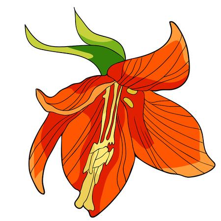 Fritillaria imperialis flower paradise tree vector illustration.