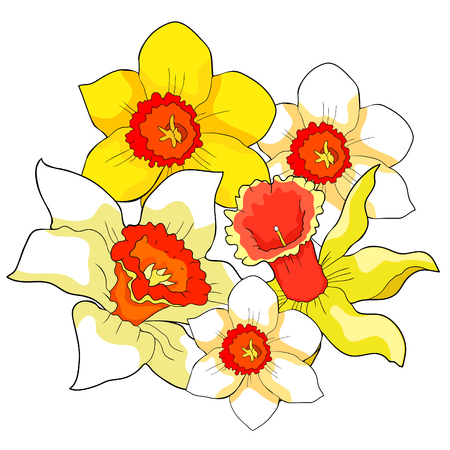 Daffodil flowers spring vector illustration isolated on white