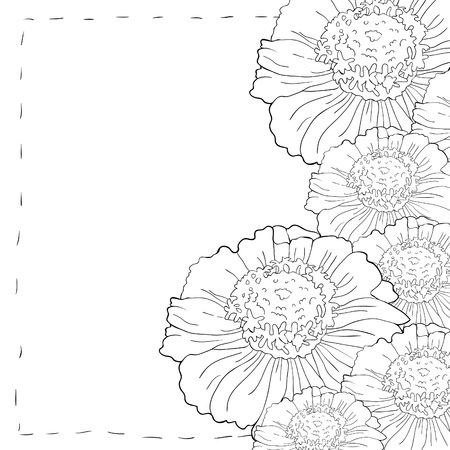 Coloring card tsiniya flower marigolds vector illustration