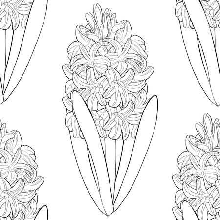 coloring  seamless pattern is hyacinth spring flower  vector illustration Stock Illustratie