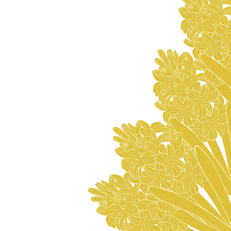 the is hyacinth spring flower gold  vector illustration