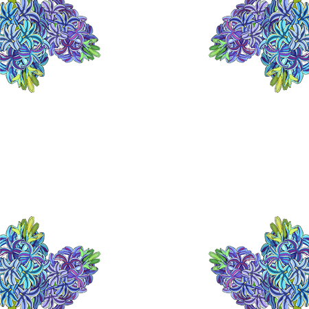 the is purple  hyacinth spring flower  vector illustration