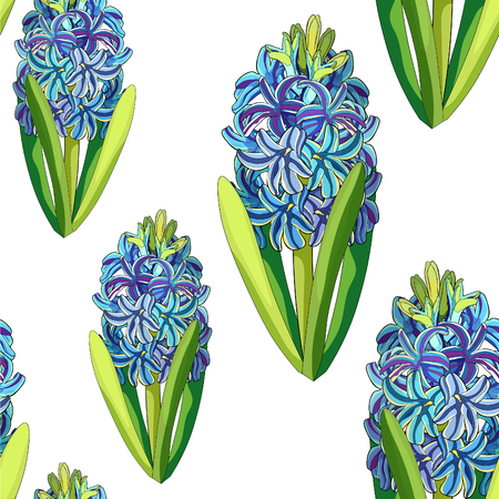 the seamless pattern  is hyacinth spring flower  vector illustration