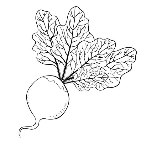 coloring  beet with a top green vegetable vector illustration Stock fotó - 103670557