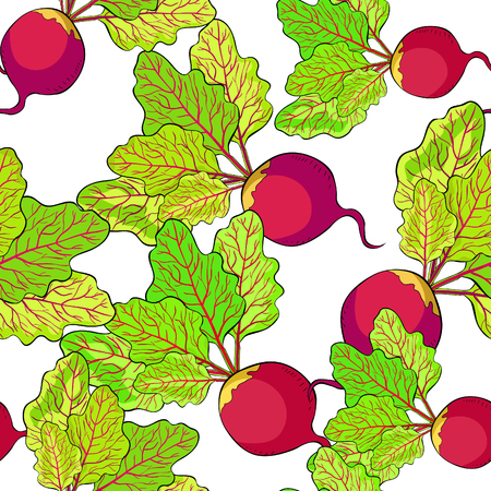 seamless pattern beet with a top green vegetable vector illustration