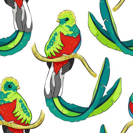seamless pattern resplendent quetzal bird male  vector illustration