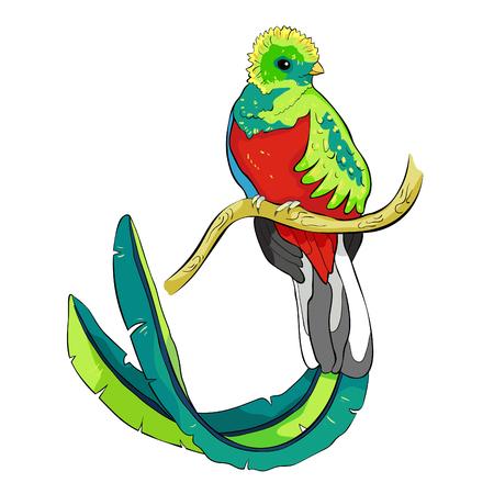 the resplendent quetzal bird male  vector illustration