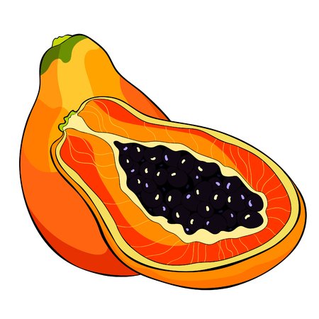the Thailand exotic fruit papaya vector illustration Ilustrace