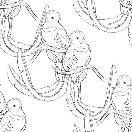 coloring seamless pattern resplendent quetzal bird male vector illustration