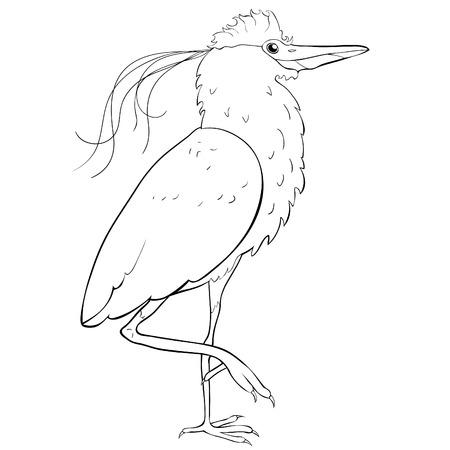 coloring South American kvakva heron bird  vector illustration