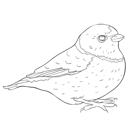 bird coloring organist Tanager family  vector illustration