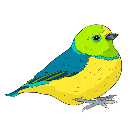 bird green organist Tanager family  vector illustration