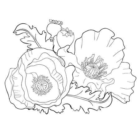 coloring poppy flower bud with seeds  vector illustration Ilustração