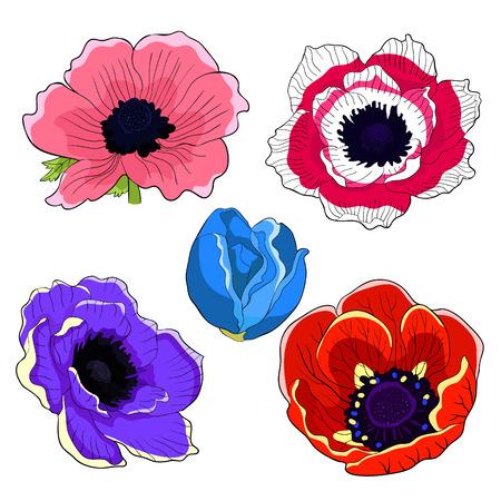 set  flower bloom japanese anemone vector illustration