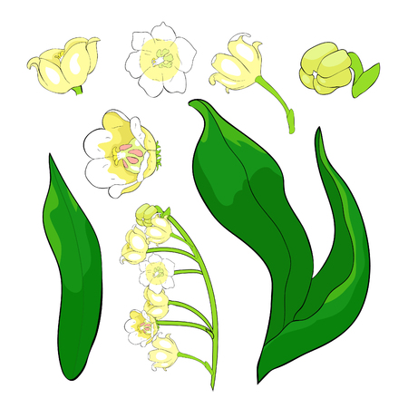set  flower lily of the valley vector illustration Çizim