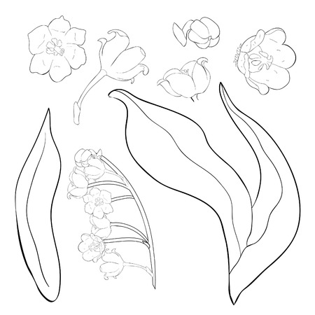 set coloring flower lily of the valley vector illustration