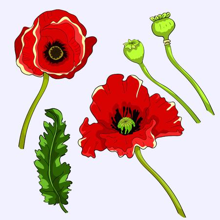 set poppy flower bud with seeds  vector illustration Ilustração