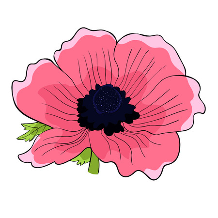 the flower bloom japanese anemone pink vector illustration