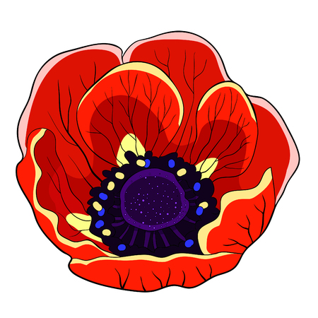 the flower bloom japanese anemone red vector illustration Ilustração