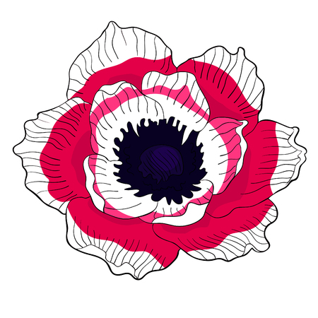 the flower bloom japanese anemone vector illustration
