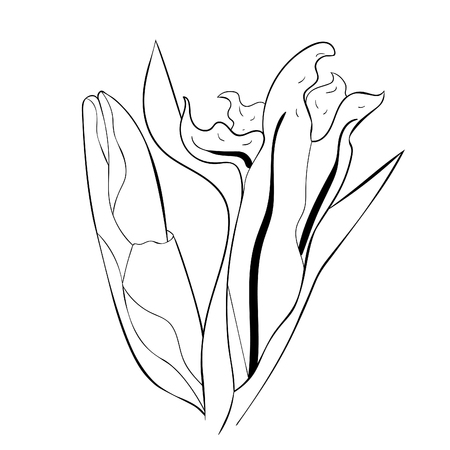 coloring is bud gladiolus flower natural vector illustration