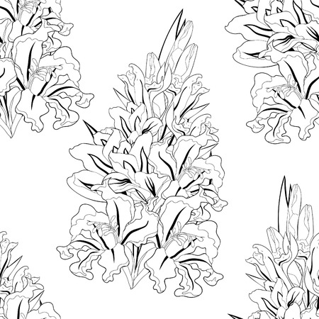 coloring seamless pattern  is gladiolus flower natural vector illustration