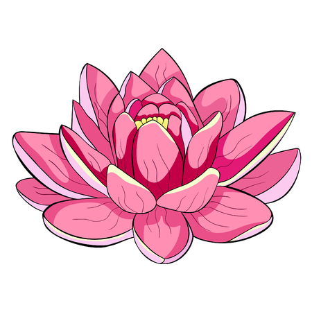 the lotus flower spiritual india vector illustration