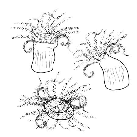 set Tubastraea solar coral underwater vector illustration