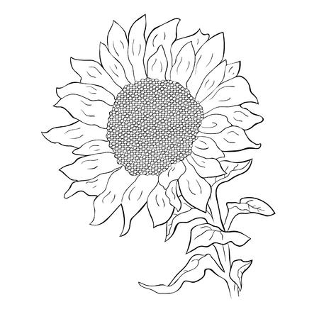 coloring  sunflower flower with seeds vector illustration Ilustração