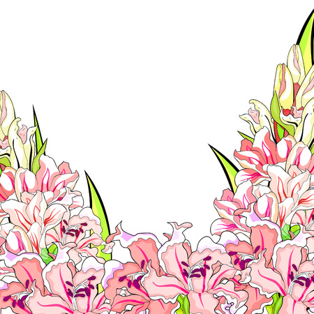 the is card gladiolus flower natural vector illustration Ilustrace
