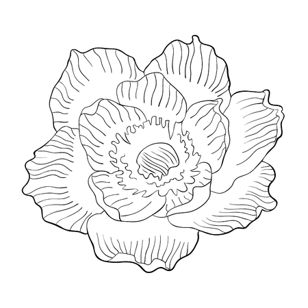 coloring flower bloom japanese anemone vector illustration Ilustração
