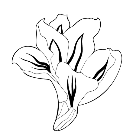 coloring is a gladiolus flower natural vector illustration Ilustrace