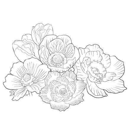 coloring flowers  bloom japanese anemone vector illustration Ilustração