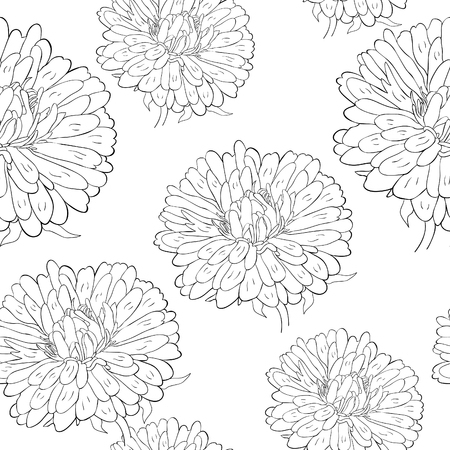 coloring seamless pattern Michaelmas daisy aster spring Flower vector illustration