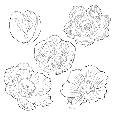 set coloring flower bloom japanese anemone vector illustration Ilustração