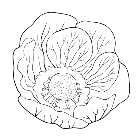 the coloring flower  japanese anemone vector illustration