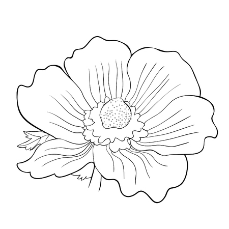 the coloring of flower bloom japanese anemone vector illustration Imagens - 126375918