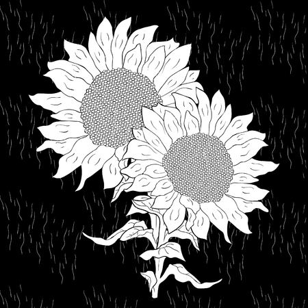 the sunflower flower with seeds on black vector illustration