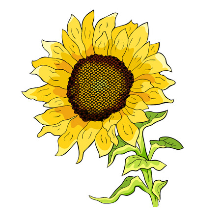 the sunflower flower with seeds vector illustration