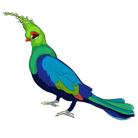 Turako Livingston Bananoed Tropical Parrot  vector illustration Imagens - 116814157