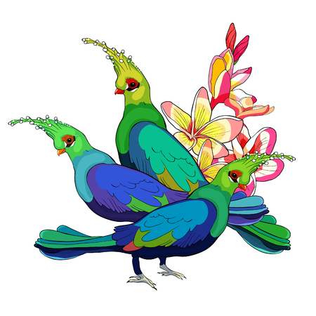 Turako Livingston Bananoed Tropical Parrot on plumeria flower vector illustration Imagens - 126375921