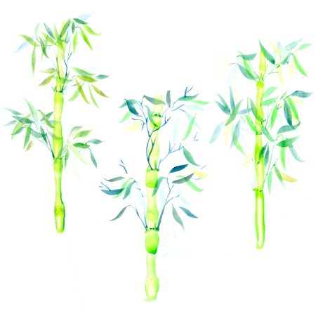 set the green bamboo chinese plant watercolor illustration