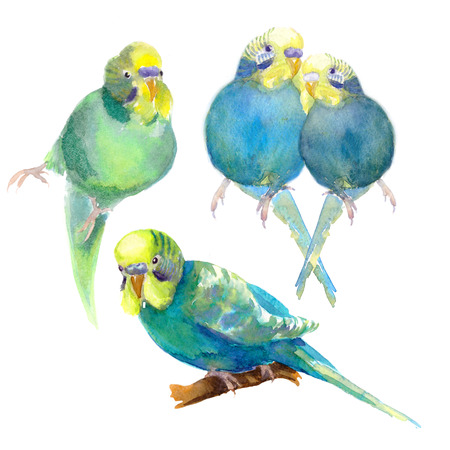set wavy parrot blue with a yellow head. watercolor illustration